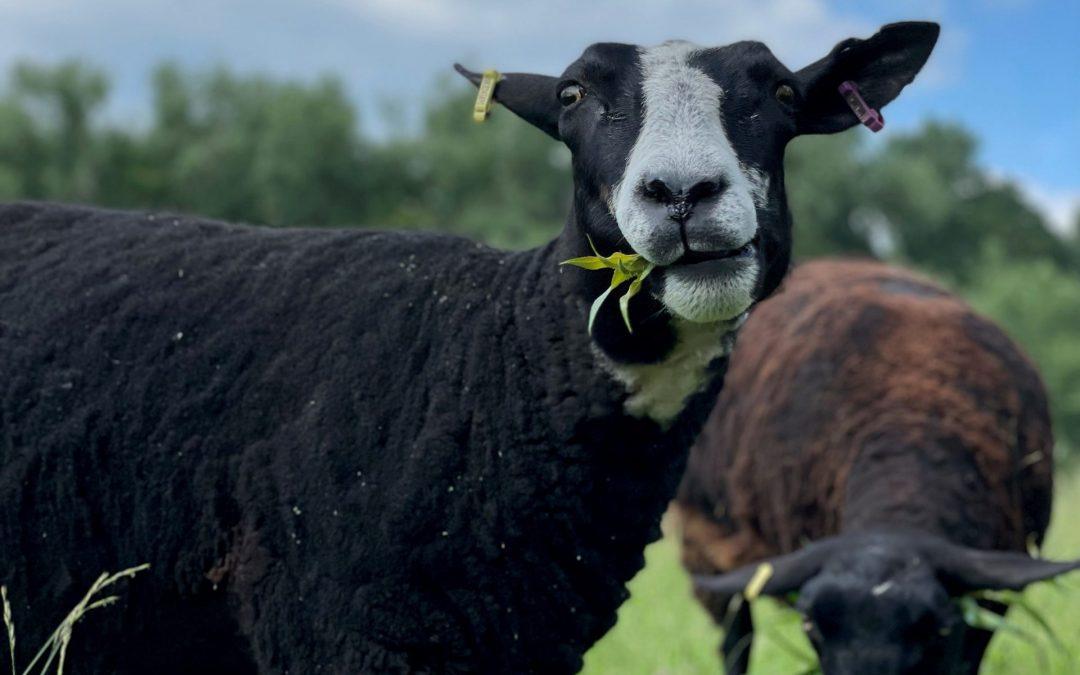 SweetTree Fields Farm Welcomes Back Visitors!